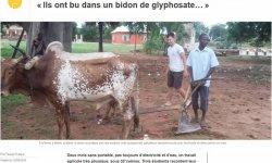 Stage agricole à Matéri pour 3 jeunes de la MFR de Carquefou